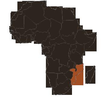 Moz-African-Rosette